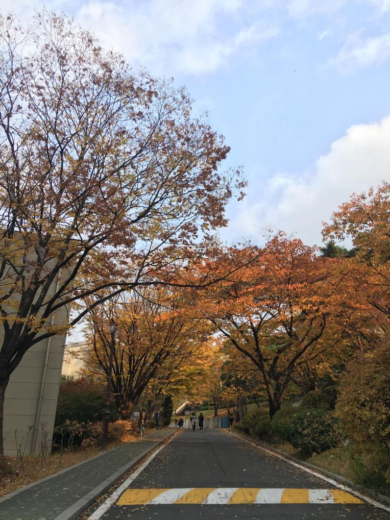 KakaoTalk_Photo_2017-11-09-22-45-52